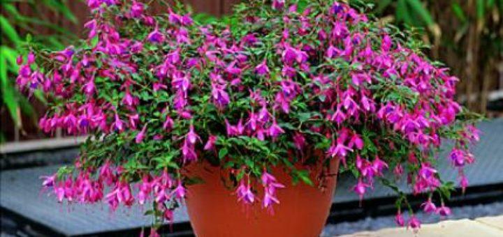 Plante exterieur resistant au gel pivoine etc for Plantes exterieur resistant gel