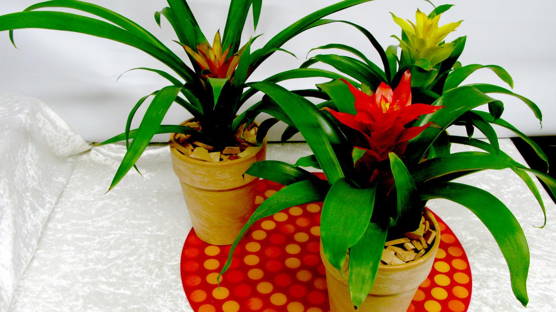 plante verte qui fleurit en hiver