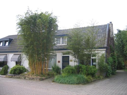 bambou phyllostachys aurea croissance pivoine etc. Black Bedroom Furniture Sets. Home Design Ideas
