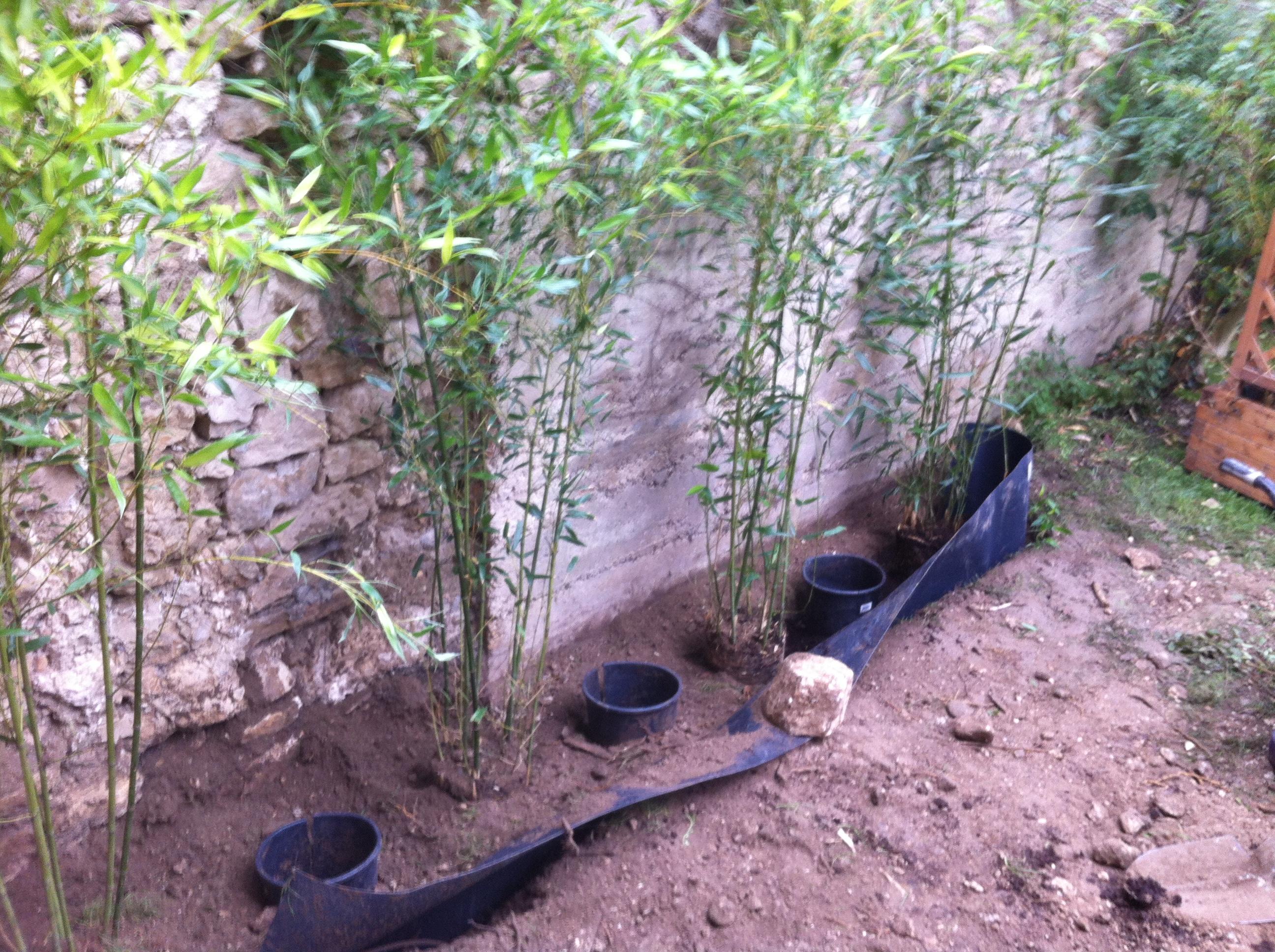 comment pousse les bambous pivoine etc. Black Bedroom Furniture Sets. Home Design Ideas