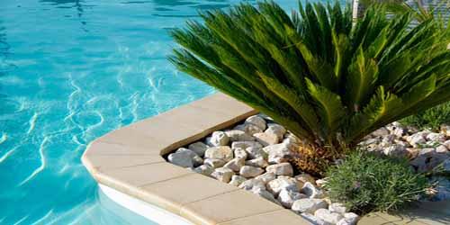 Plante Verte Exterieur Jardin Pivoine Etc