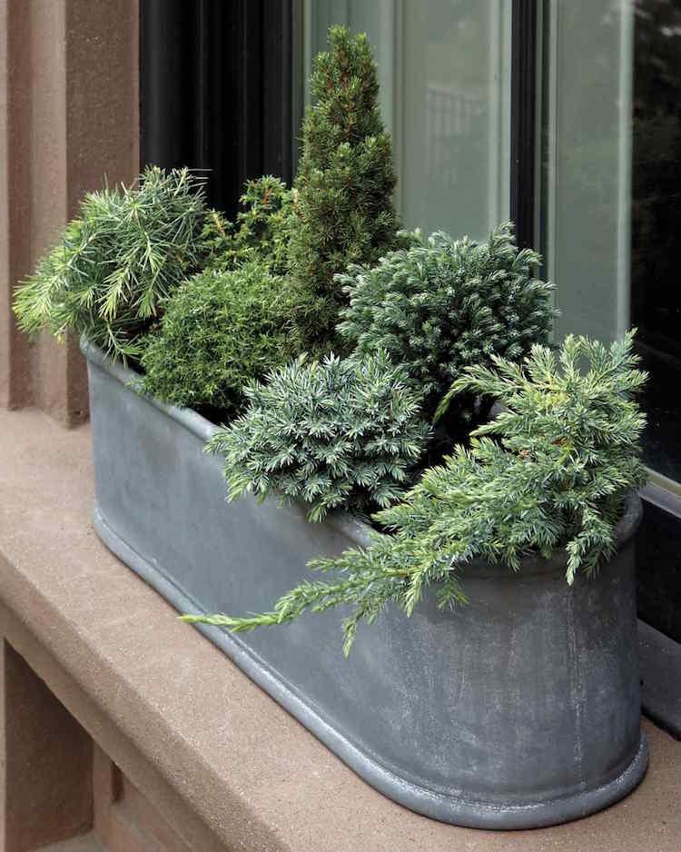 Plantes automne hiver jardini re pivoine etc for Jardiniere d hiver