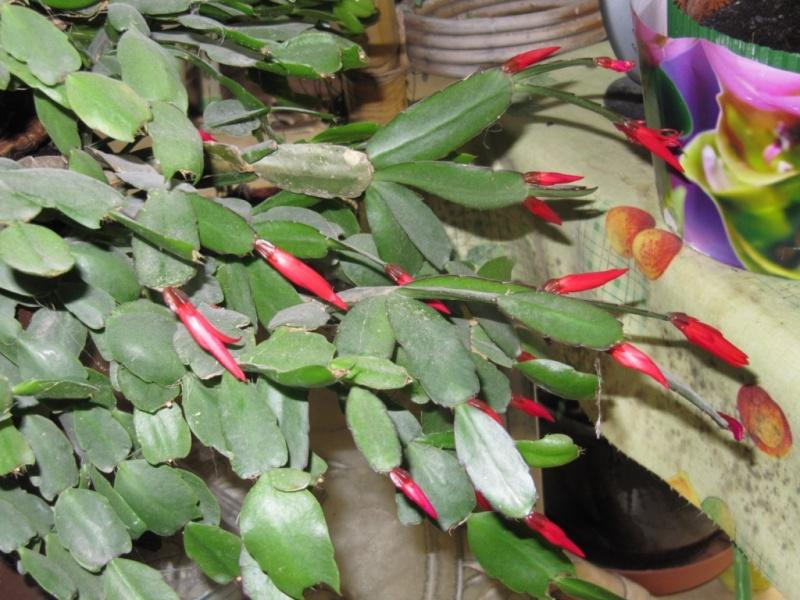 Plantes Grasses Fleuries Interieur