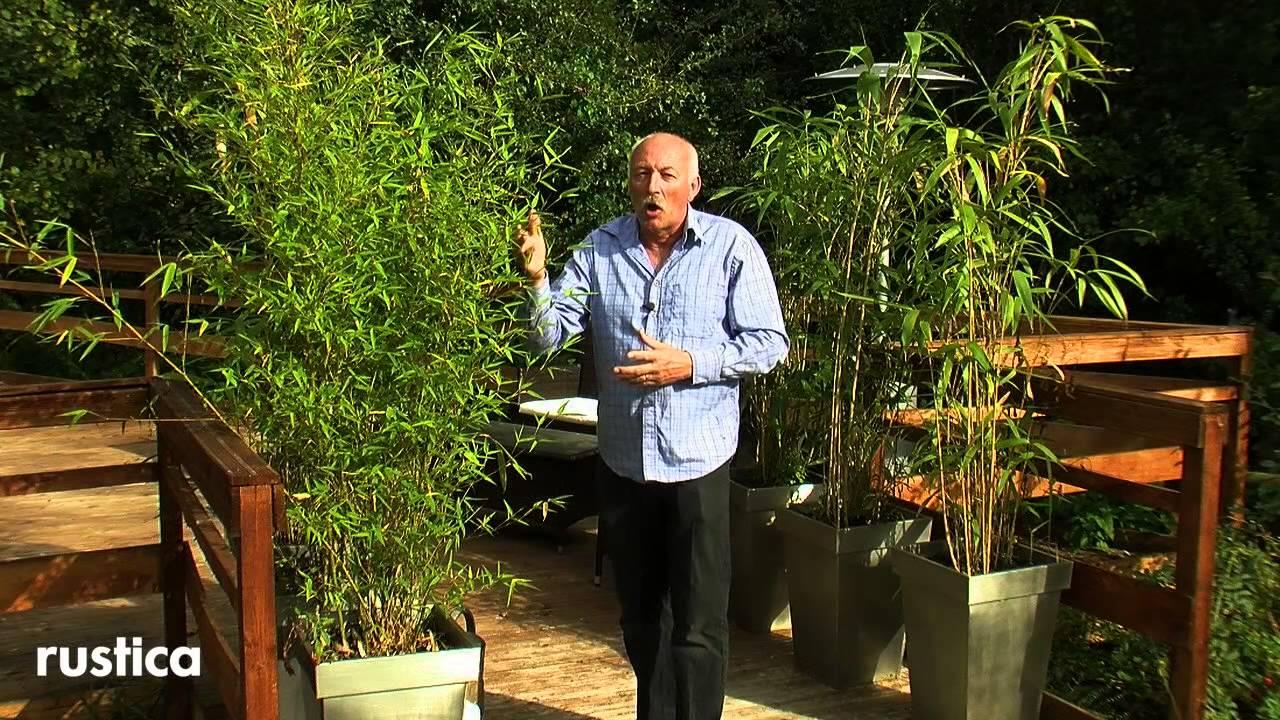 dimension jardiniere pour bambou pivoine etc. Black Bedroom Furniture Sets. Home Design Ideas