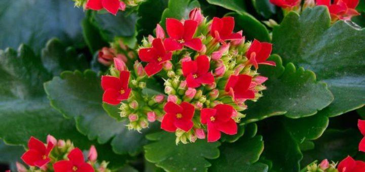 Les plantes grasses d int rieur pivoine etc - Plantes grasses d interieur ...