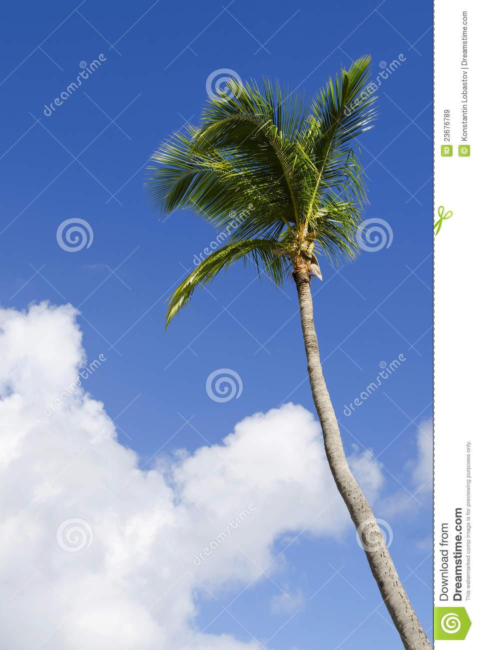 Palmier exotique pivoine etc - Palmier noix de coco ...