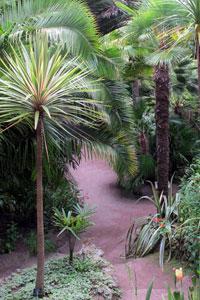 Arbuste exotique rustique pivoine etc for Plante exotique exterieur