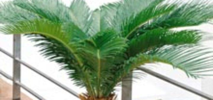 Acheter plante interieur pivoine etc for Acheter plante interieur