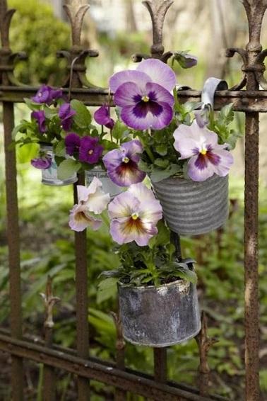 Fleurs d hiver pour balcon pivoine etc - Plante balcon hiver ...