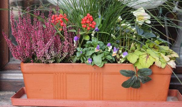 Fleurs d hiver jardini re pivoine etc for Jardiniere d hiver