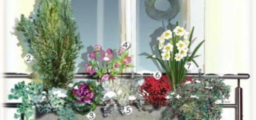 Plantes exterieur resistant gel pivoine etc for Plantes exterieur resistant gel