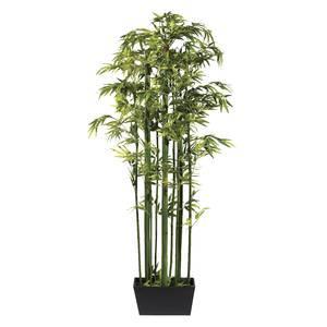 Plante bambou int rieur pivoine etc for Bambou interieur entretien