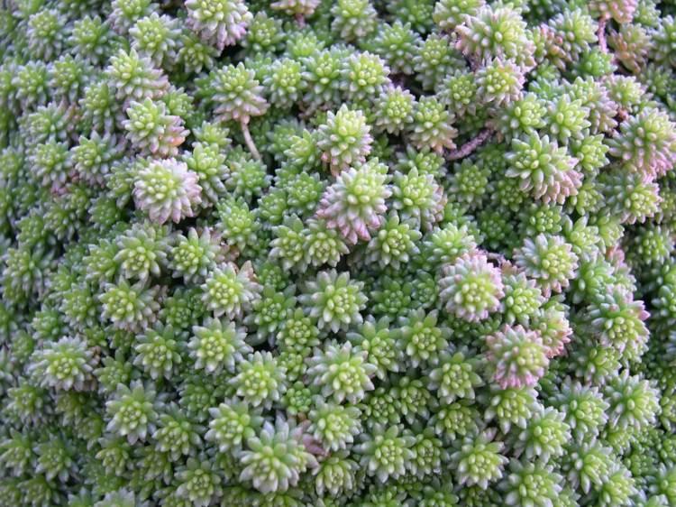 Belle plante exterieur pivoine etc for Plante exterieur hiver