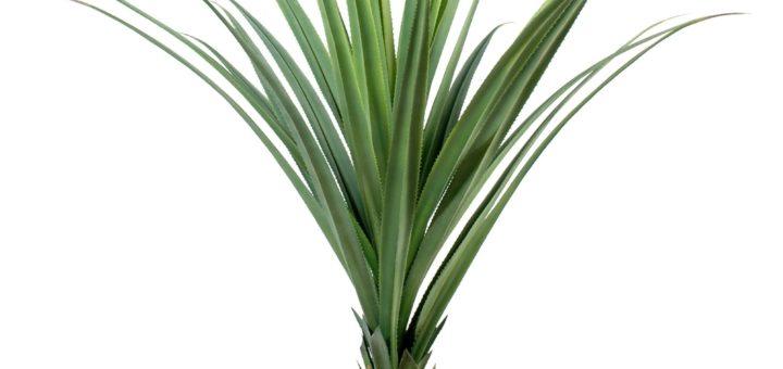plantes vertes exterieur pivoine etc. Black Bedroom Furniture Sets. Home Design Ideas