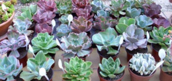 cactes et plantes grasses d extrieur - Les Plantes Grasses D Exterieur