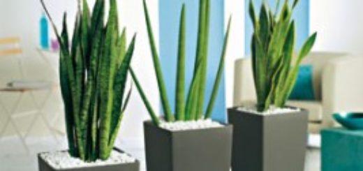 Plantes carnivores pivoine etc for Plantes vertes hautes