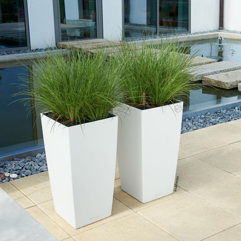 Plante haute en pot pivoine etc for Plante verte haute exterieur