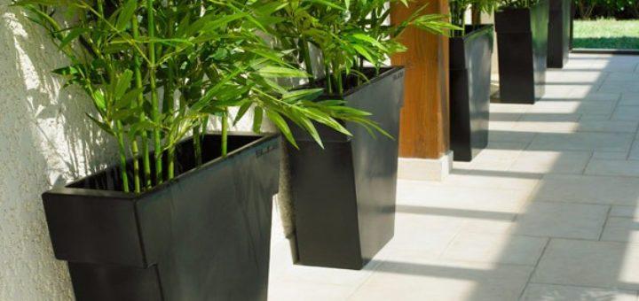 arbre exterieur en pot pivoine etc. Black Bedroom Furniture Sets. Home Design Ideas