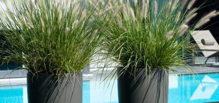 Plante pour grand pot exterieur pivoine etc for Plante verte haute exterieur