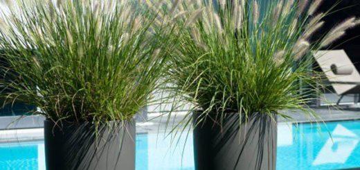 0 plante hiver - Grande Plante Exterieur En Pot