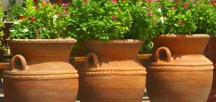 plante en pot exterieur sans entretien pivoine etc. Black Bedroom Furniture Sets. Home Design Ideas