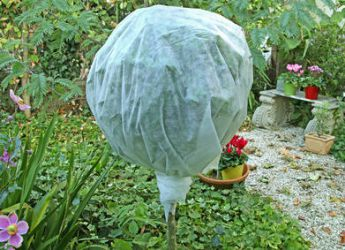 protection plante hiver pivoine etc