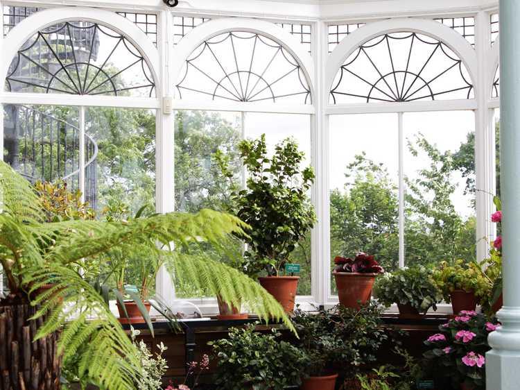 plantes jardin d hiver pivoine etc. Black Bedroom Furniture Sets. Home Design Ideas