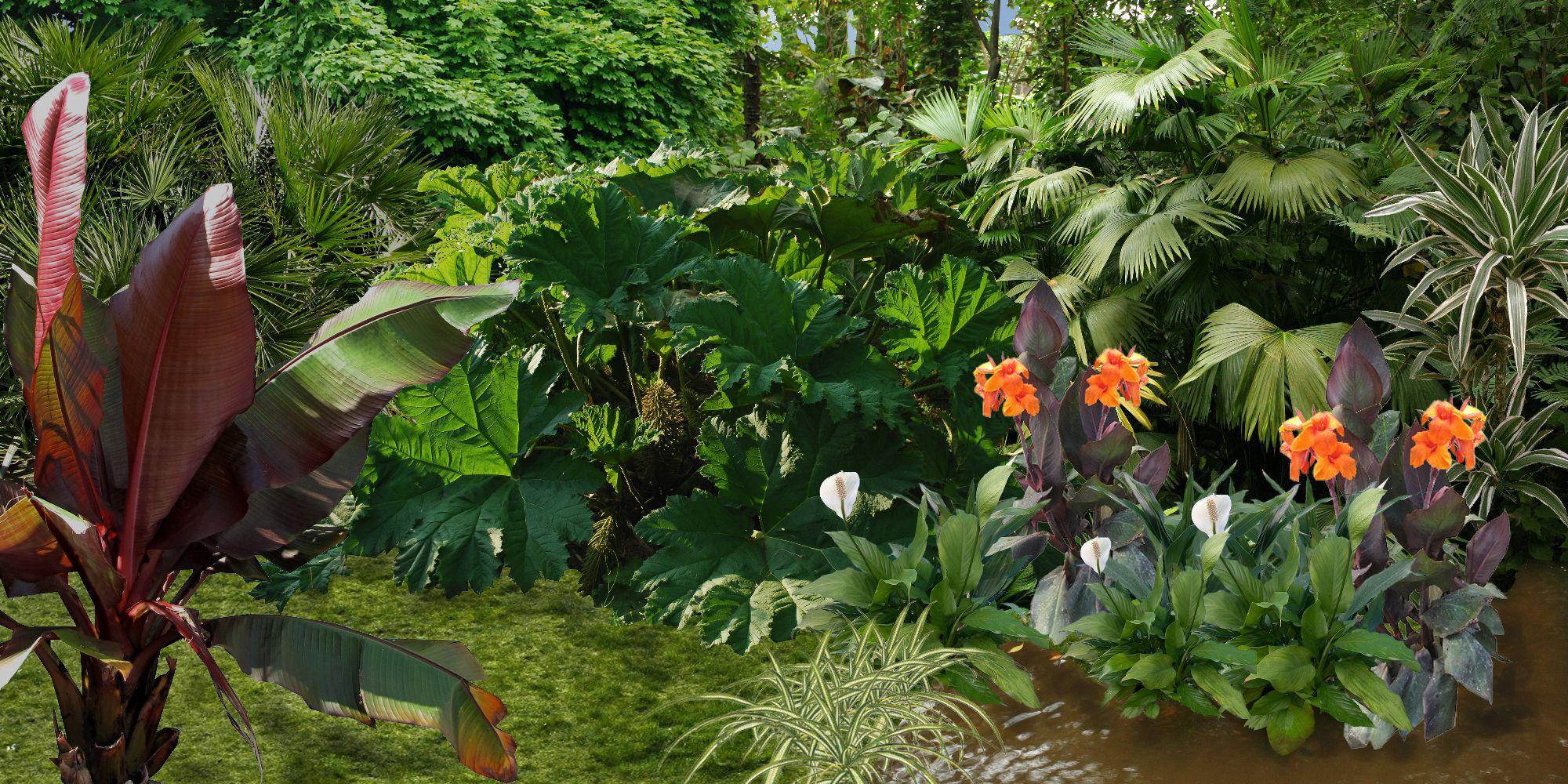 Plan jardin exotique pivoine etc for Plante exotique jardin