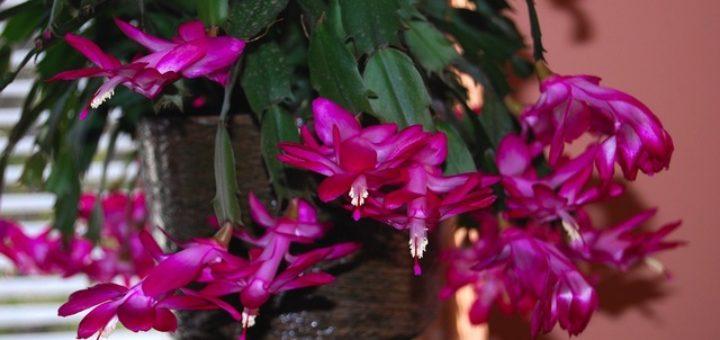 plante exotique avec fleur rose