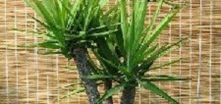Plante verte exterieur plein soleil pivoine etc for Plante verte exterieur