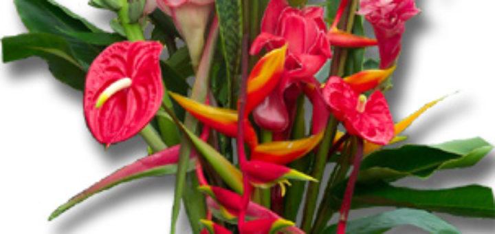 Fleur antillaise - pivoine etc