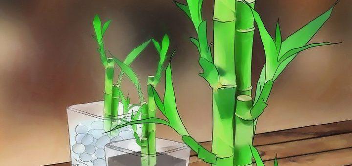 Comment faire pousser du bambou pivoine etc - Faire pousser du bambou ...