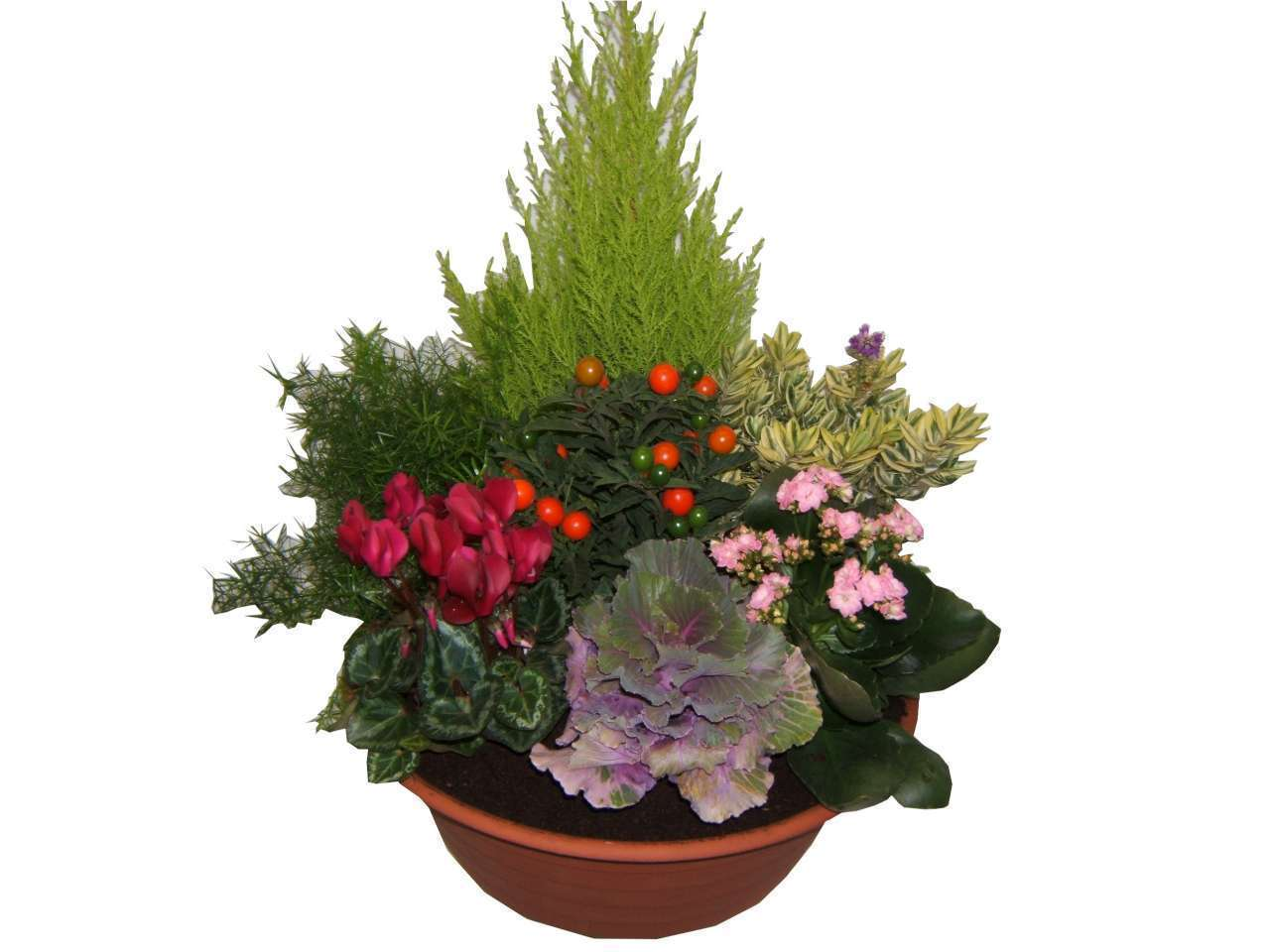 faire livrer des fleurs pour un enterrement pivoine etc. Black Bedroom Furniture Sets. Home Design Ideas