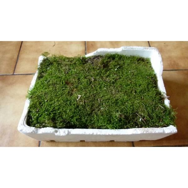 Mousse pour composition florale pivoine etc for Composition florale exterieur hiver