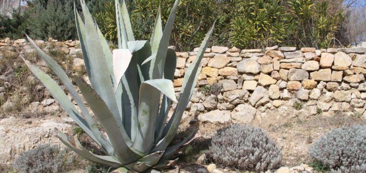Plante verte exotique exterieur pivoine etc for Plante exotique exterieur