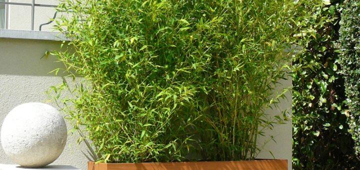 Quel bac pour bambou pivoine etc - Quel terreau pour bambou ...