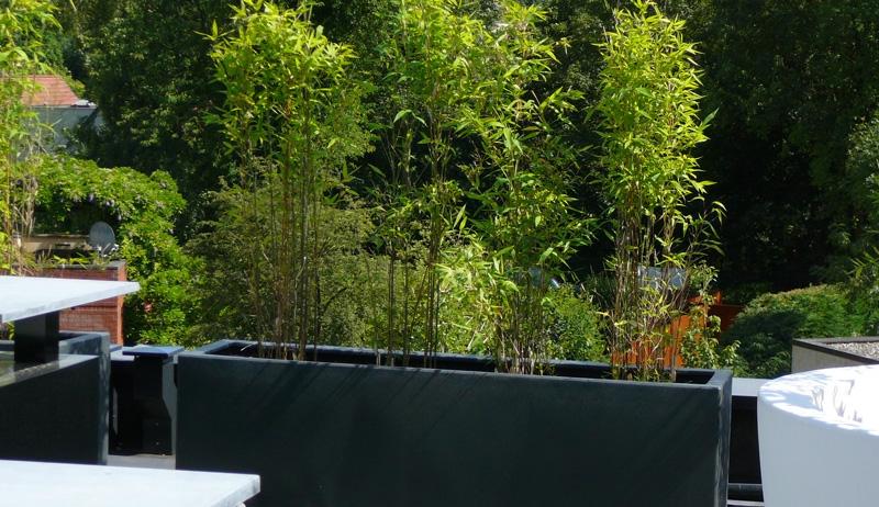 bambou en pot sur terrasse pivoine etc. Black Bedroom Furniture Sets. Home Design Ideas