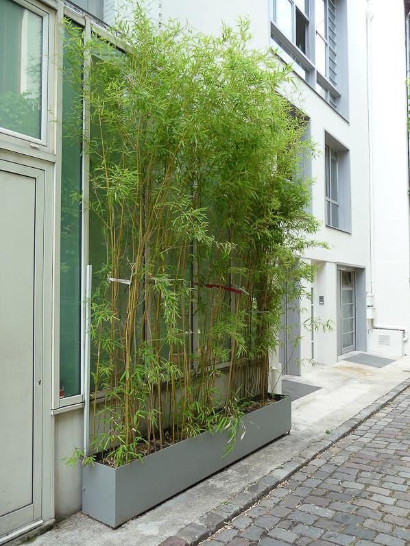 jardiniere de bambou pivoine etc. Black Bedroom Furniture Sets. Home Design Ideas