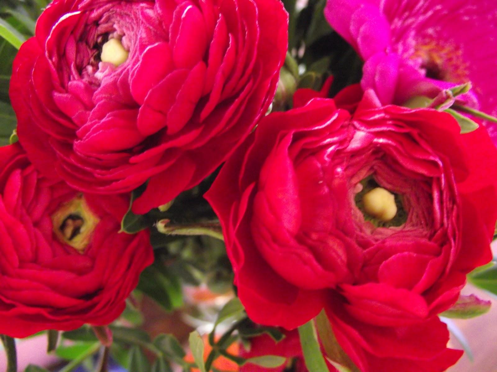 fleur rouge hiver pivoine etc. Black Bedroom Furniture Sets. Home Design Ideas