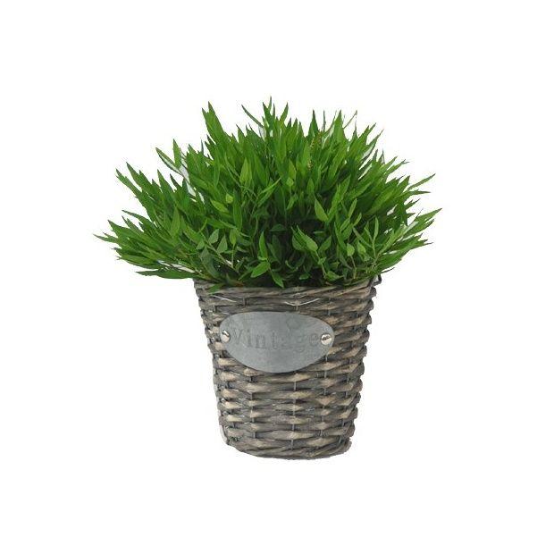 bambou plante entretien pivoine etc. Black Bedroom Furniture Sets. Home Design Ideas