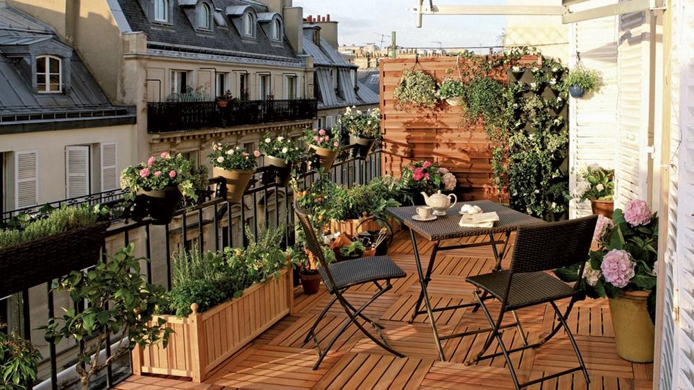 plantes d hiver ext rieur balcon pivoine etc. Black Bedroom Furniture Sets. Home Design Ideas