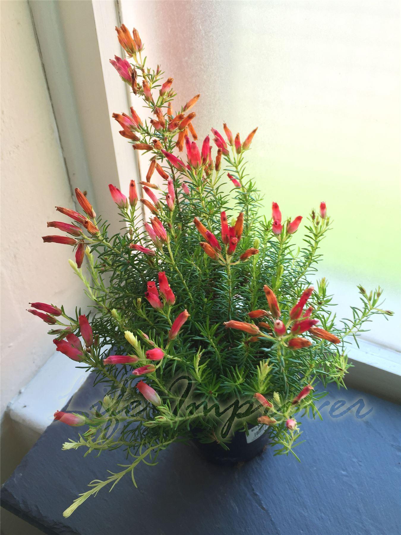 Plante En Pot Ext 233 Rieur Hiver Pivoine Etc