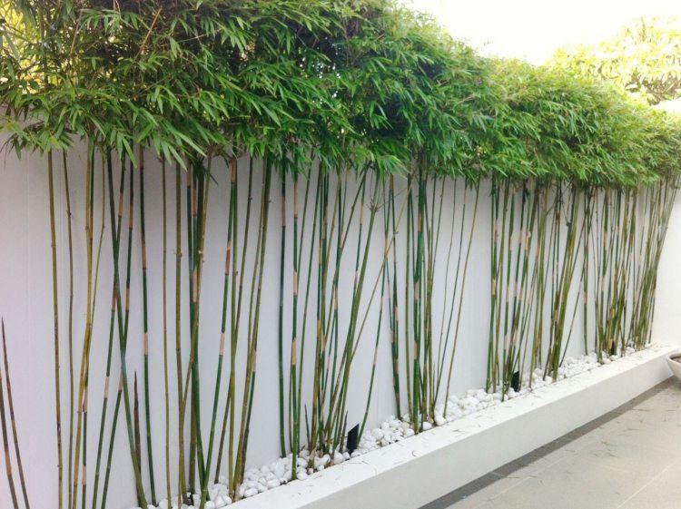 taille jardiniere pour bambou pivoine etc. Black Bedroom Furniture Sets. Home Design Ideas