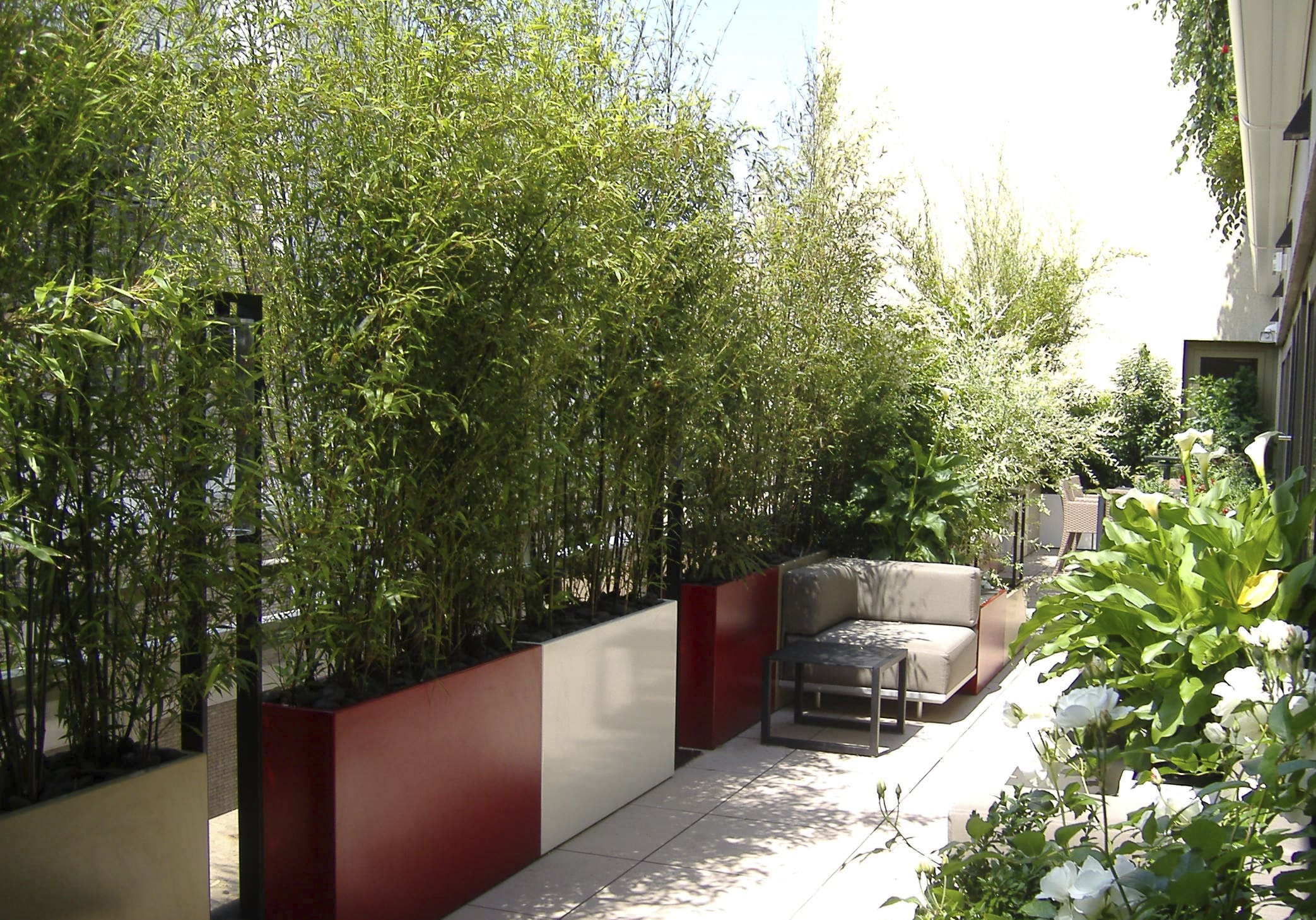 bambou dans jardiniere pivoine etc. Black Bedroom Furniture Sets. Home Design Ideas