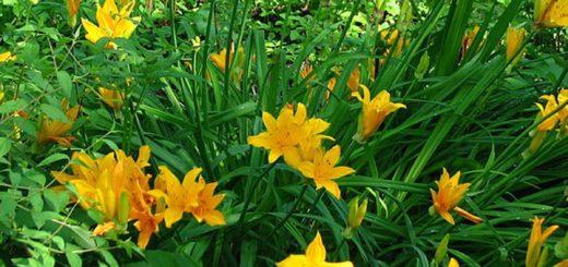 Plante verte vivace exterieur pivoine etc for Plante verte vivace