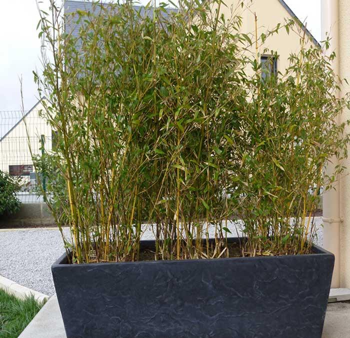 pot bambou exterieur