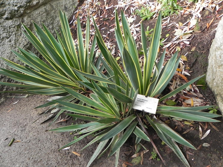 Plantes grasses exotiques pivoine etc - Jardin plante grasse ...