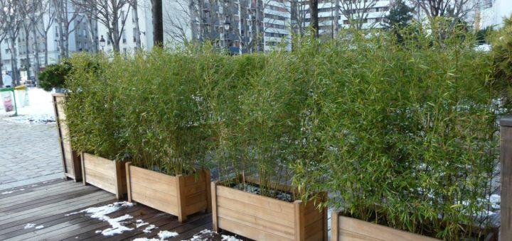 haie de bambou en jardiniere pivoine etc