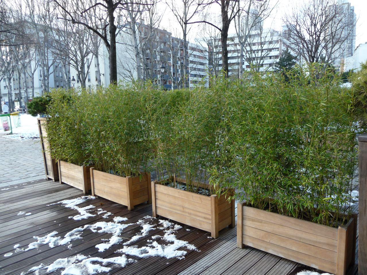 Haie de bambou en jardiniere pivoine etc - Bambou en bacs terrasse ...