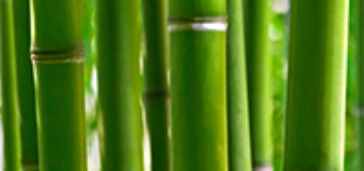 Entretien des bambous exterieur pivoine etc - Entretien des bambous ...